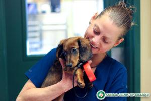 veterinarian holding pretty dog in vet hospital