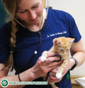 veterinarian listening to kittens heartbeat