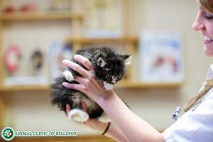 veterinarian with kitten