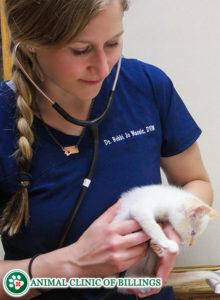 kitten veterinarian