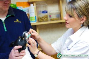 veterinarian gives oral medication to dog