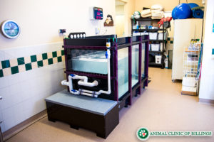 canine underwater treadmill for dogs