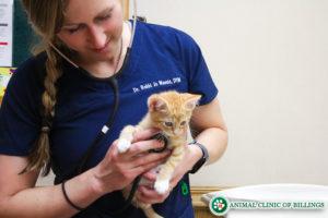caring cat veterinarian