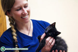 kitten with veterinarian at cat clinic
