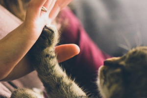cat high five with human