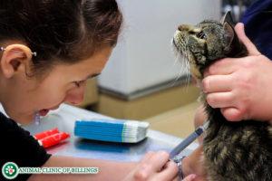 cat medication