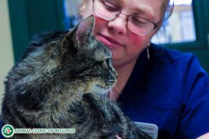 cat vet emergency veterinary hospital