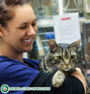 cat with veterinarian at the vet hospital