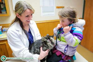 child playing doctor on her cat with veterinarian