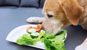 dog eating vegetables