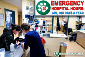 vet technicians with cat at 24 hour emergency veterinary hospital