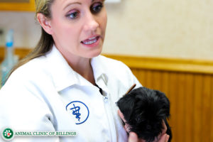 dog veterinarian recommending advice to pet owners