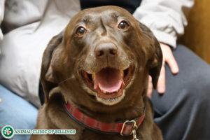 happy dog at veterinary clinic