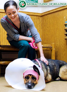 dog with head cone at veterinary hospital
