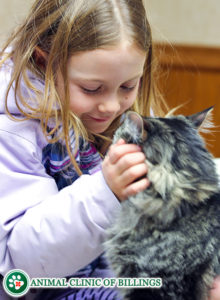 little girl and her cat at veterinary clinic