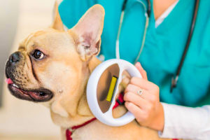 microchipping pets with implant