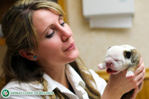 pretty veterinarian with puppy