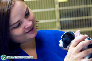 veterinarian holding puppy smiling