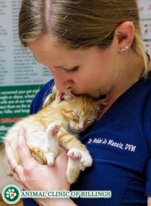 veterinarian kissing cat