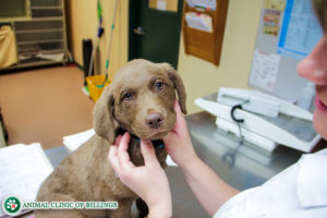 veterinarian recommendations for puppies