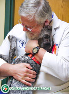 veterinarian hugging dog licking him