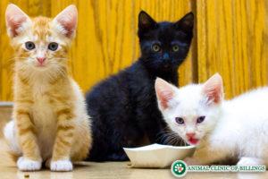 kittens at vet clinic
