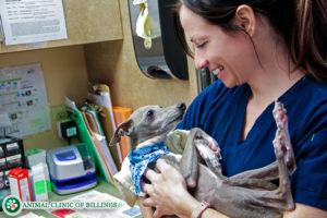 vet holding dog at veterinary hospital